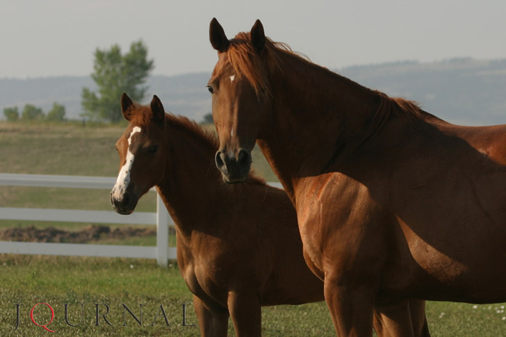 Double Dove broodmare and foal
