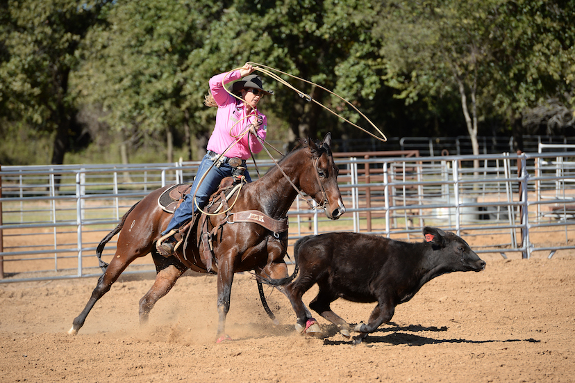 Jackie Crawford swings her rope as a bay horse tracks a calf (Credit: Lone Wolf Photography)