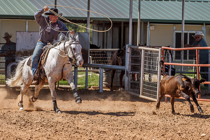 James Barton tie-down roping practice on the gray horse AQHA world champion Mamas Duel N At Boon (Credit: Abigail Boatwright)