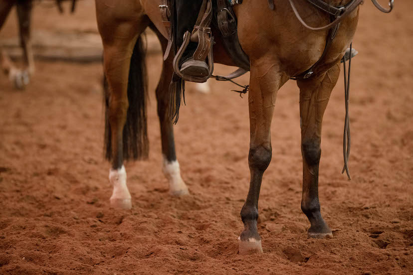 front and back legs of a bay western horse (Credit: Kirstie Marie Photography for AQHA)