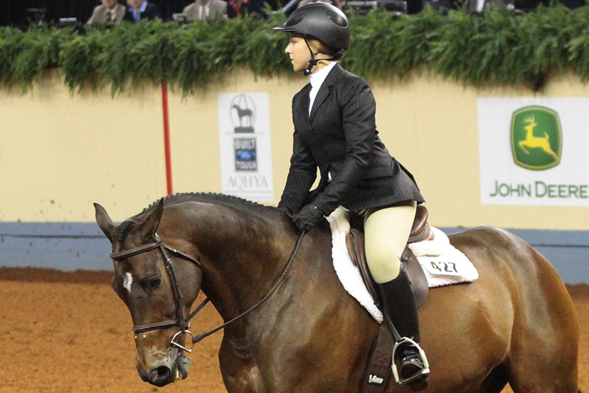 English rider on a bay horse demonstrates a half seat or light seat (Credit: Journal)