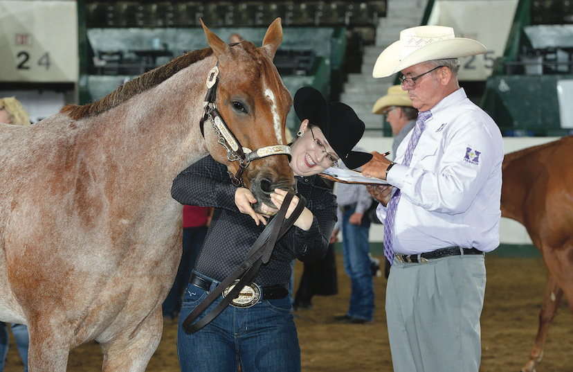 an exhibitor shows the teeth of her red roan American Quarter Horse to AQHA Judge John Boxell during a halter class (Credit: Jennifer Horton)