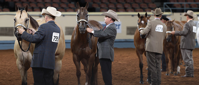 halter horses line up for inspection (Credit: Journal)