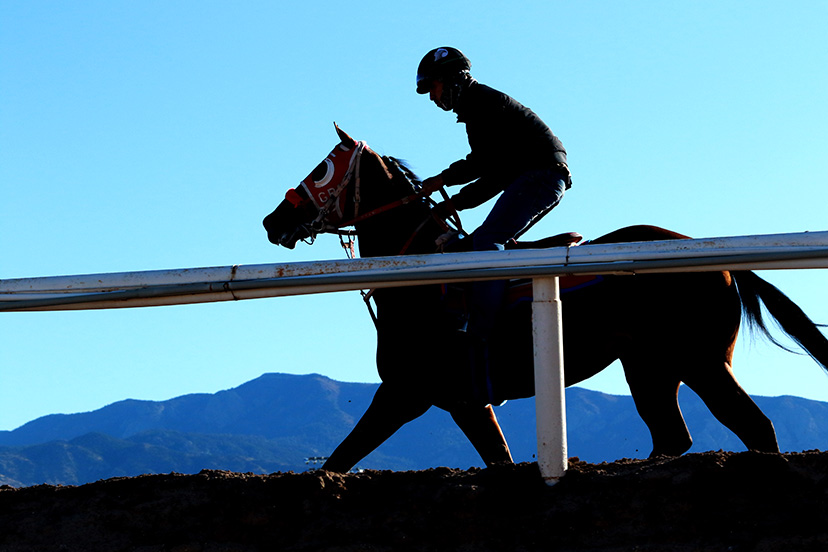 racehorse workout silhouette downs at albuquerque (Credit: Andrea Caudill)