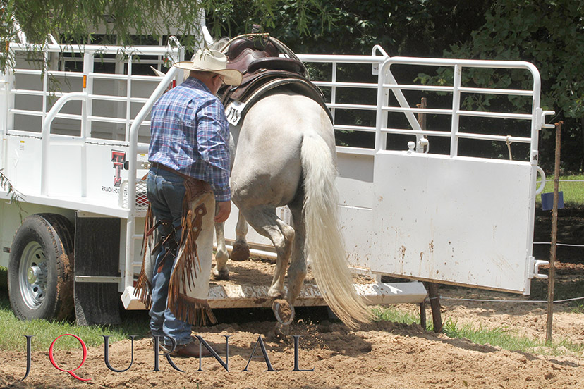 horse self load in trailer (Credit: Journal)