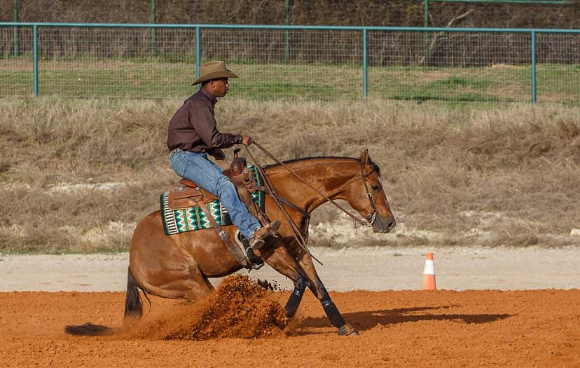 Ed Harrison and bay reining horse perform a sliding stop
