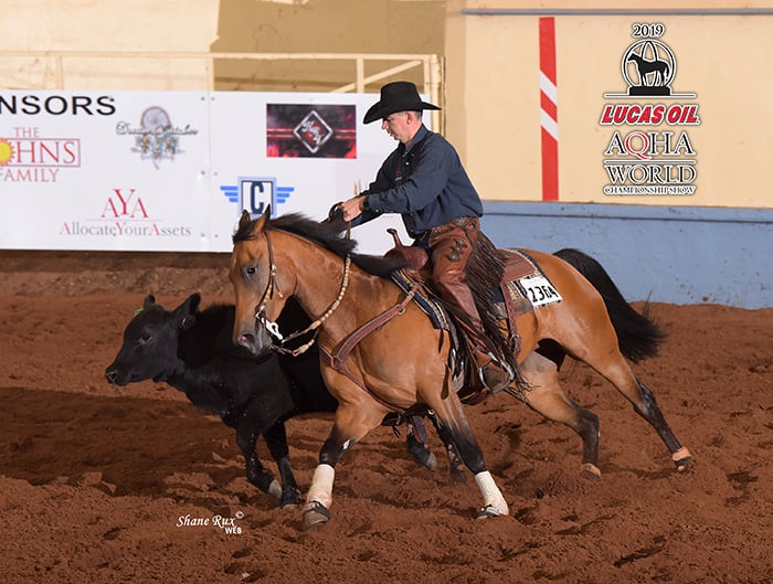 bay horse in a working cow horse class