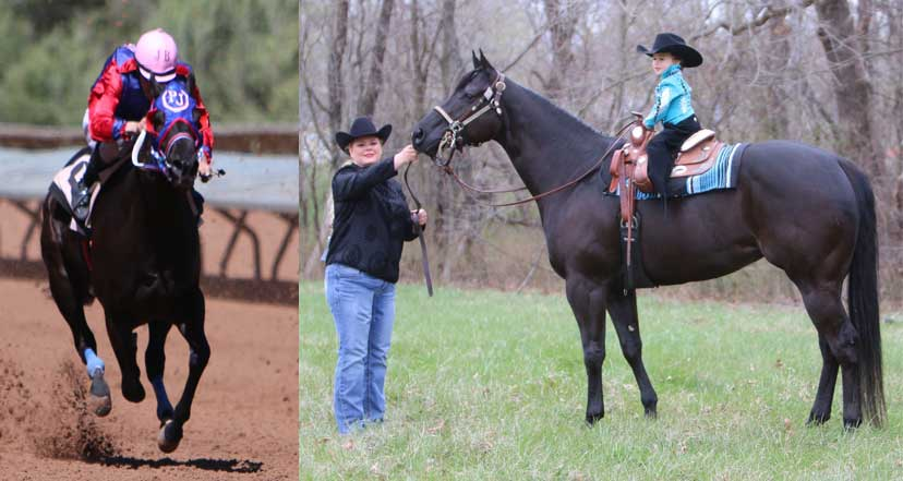 Second Career Star SCS Shenoshowtofly, a dark bay nearly black horse, image shows two pictures, on left is the horse as a racehorse, and the right is the horse as a leadline competitor, standing with her owner at her head, and a small girl sitting on her back in a western saddle.