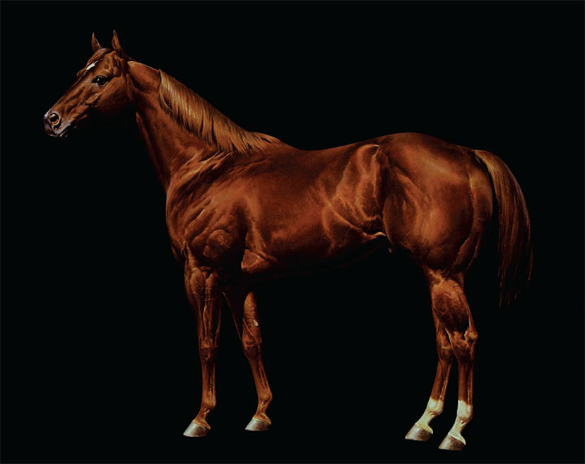 the ideal American Quarter Horse, as drawn by Orren Mixer
