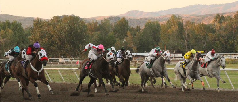 a field of horses race to the finish line